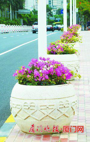 ■湖滨中路上的花钵。