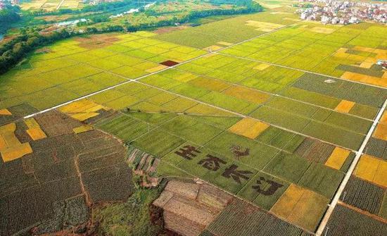 曾是长汀最严重的水土流失区河田已成为长汀的生态粮仓