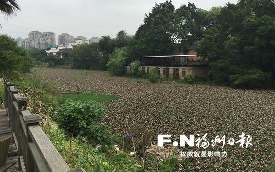 改造前的流花溪河道被垃圾和水葫芦占据。