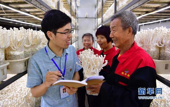 福建古田:小菌菇开启脱贫路 海鲜菇产品远销全国各地