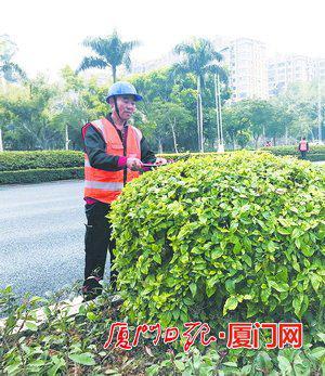 罗太友修剪树木。(本报记者林施赟摄)