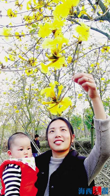 黄花美景让游人驻足观赏。