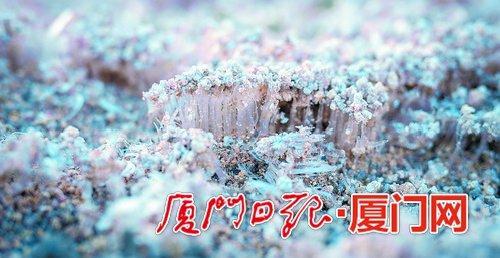低温过后的土层长出了一片长度约三厘米的冰柱,将表层的沙土顶起。