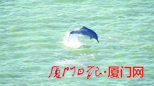 一只白海豚跃出水面,水花四溅。(读者吴女士提供视频截图)