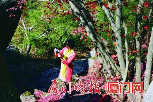 ■五裂槭 何燕欣 摄