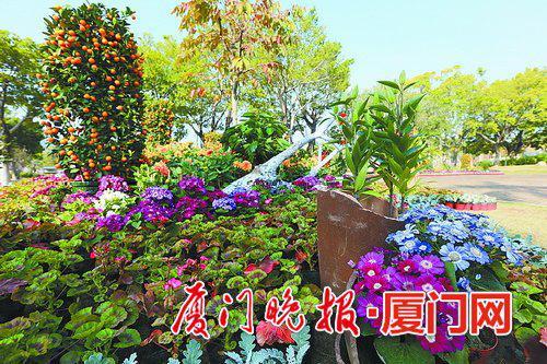 -观赏花卉造景