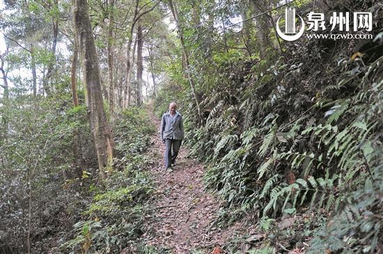 老张几乎每天都要走10公里的山路巡山