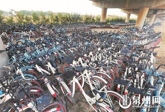 泉州大桥下成了共享单车的安置维修点