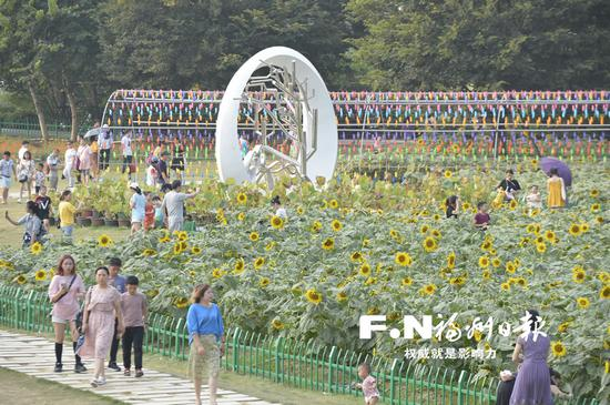 花海公园的向日葵花海吸引不少市民前来观赏。记者 池远 摄