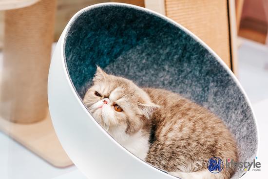 SM喵年华·猫咪生活方式展开幕 全方位呈现猫咪生活美学