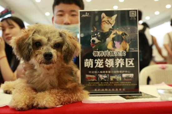 """福州正荣美好七夕,关爱流浪动物呼吁带走""""单身狗"""""""