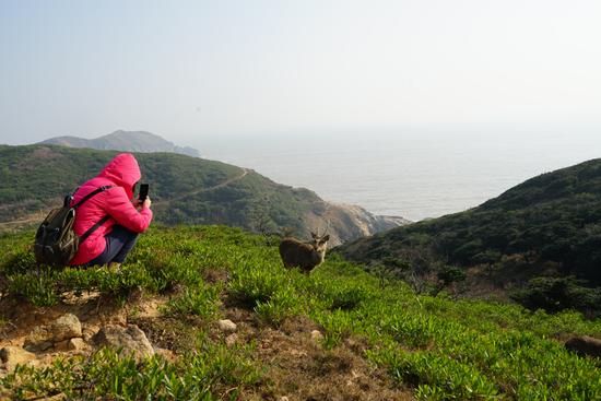 游客在拍摄大丘岛上的野生梅花鹿
