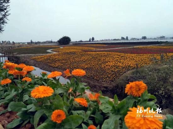 湿地公园内鲜花盛开。