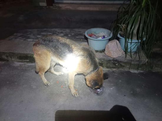 漳州:大型流浪犬扰民 民警全力抓捕除隐患