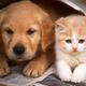 全城寻找最萌小宠物 可享特别定制礼物