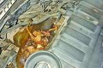 老鼠把发动机舱当成贮藏室 车子一启动就闻烤鸭香