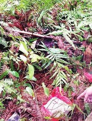 龙岩三男盗窃50万 山里挖坑埋赃款