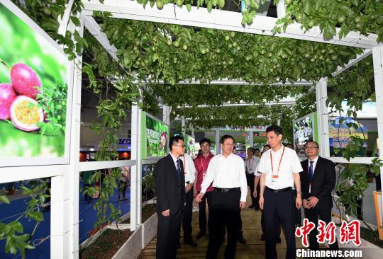 福建省副省长黄琪玉参观6.18现代农业馆。 刘文标 摄