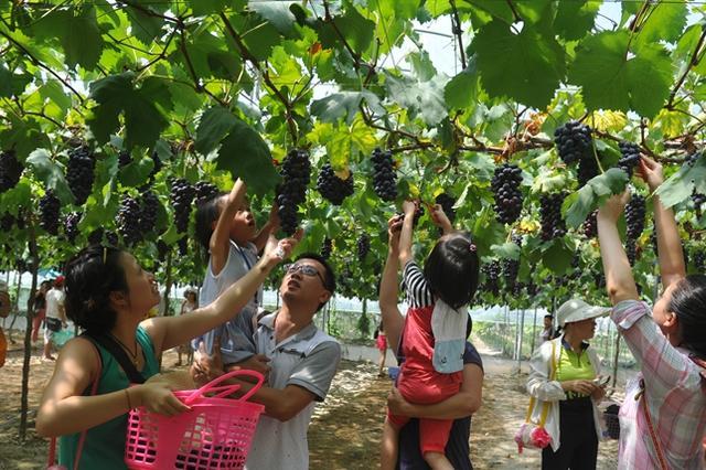 国庆福州景区活动优惠多 今年游客数量有望创新高