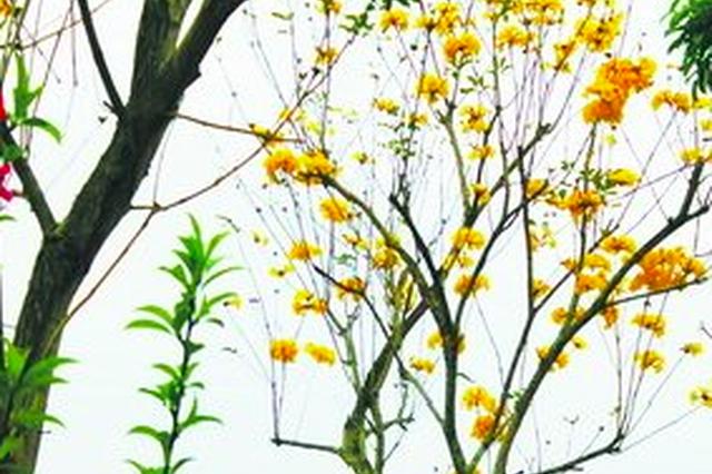 漳州台商投资区:种植花木保护钱柜娱乐水源地