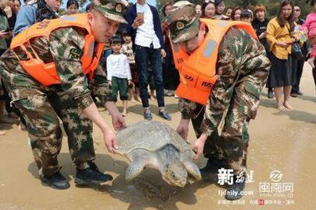 渔民误捕国家二级保护动物玳瑁 东山边防组织放生