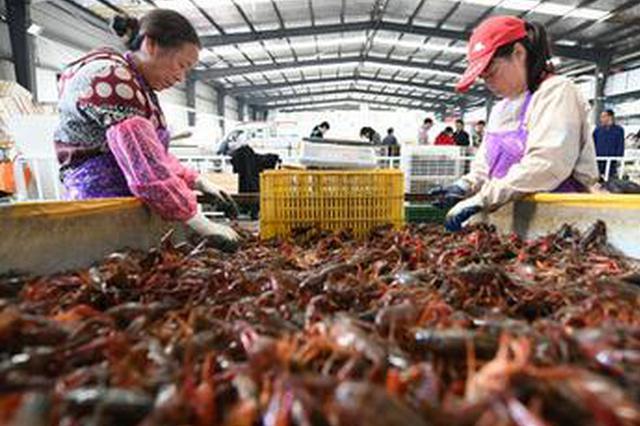 中国小龙虾搭中欧班列赴俄 出征世界杯为国争鲜