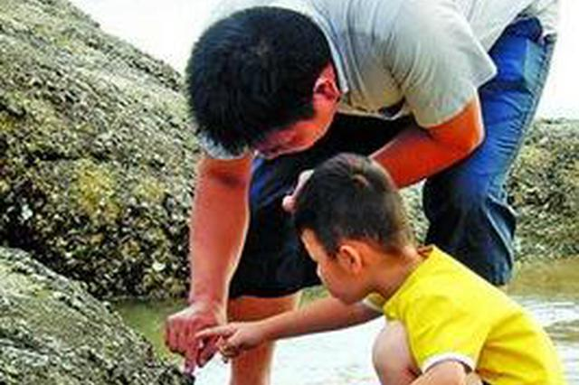 厦门:千人海边挖花蛤 专家称不提倡