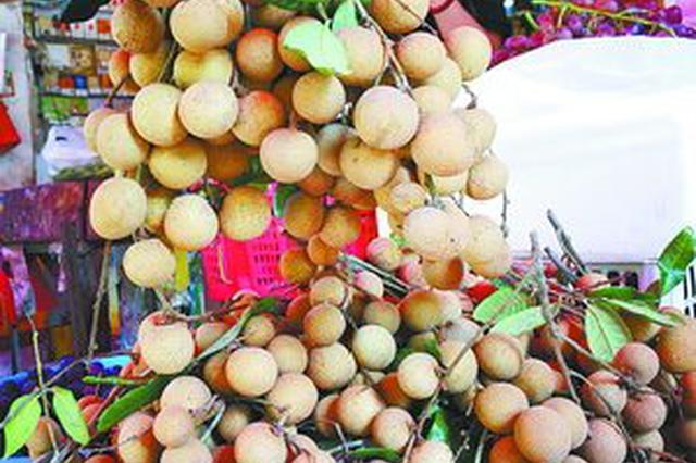 省内产优质龙眼大量上市 挂果量十年最多价格降两成