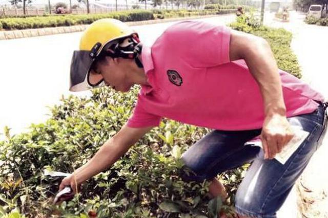 泉州市区现红火蚁窝 含几万只红火蚁已被消杀