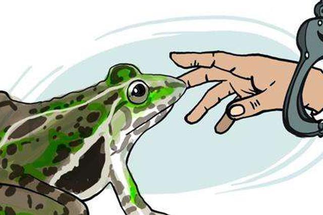 龙岩一男子捕蛙十四只售卖 获刑六个月