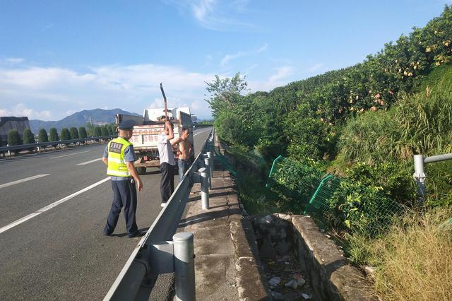 漳州:高速隔离栏栅被破坏,一头死猪丢弃旁边