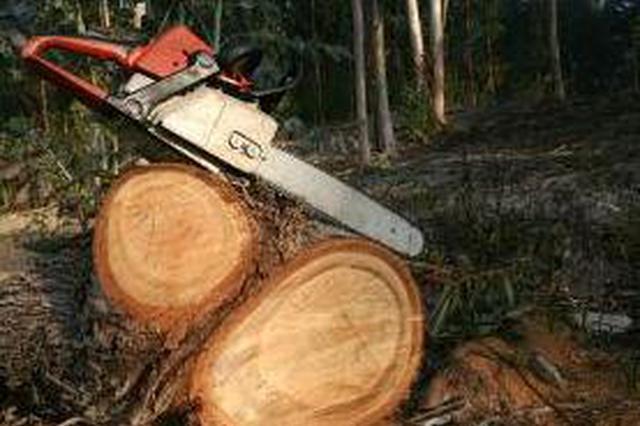 漳州男子擅砍自己种的树 被判刑三年罚款一万