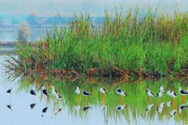 闽江河口湿地国家级自然保护区退养还湿见成效