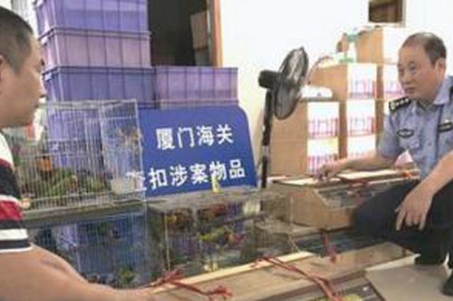 厦门:走私活鹦鹉1.4万只 9名犯罪嫌疑人落网
