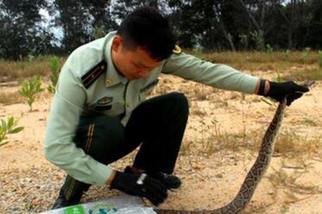 漳州一2米蟒蛇误入民房自投罗网 民警及时解救放生