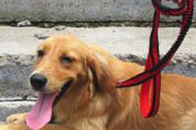 泉州七旬阿婆散步被狗扑倒 摔成骨折索赔8万余元