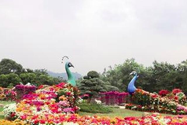 漳州花博会明日将开幕 三角梅观赏园不容错过