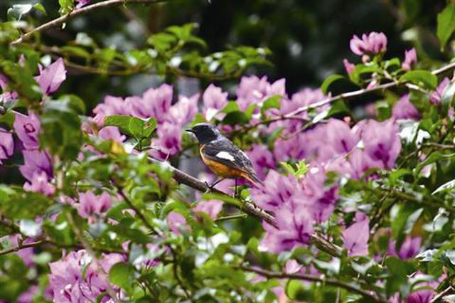 候鸟南飞季至少175种候鸟来厦 这些地点为最佳观鸟点