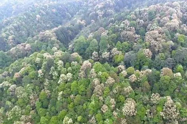 龙岩:全市共计1465万亩林区 年投入2.7亿重点保护
