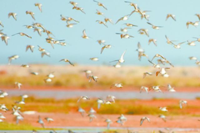 厦门观鸟:全国四分之一的鸟类在这都能看到