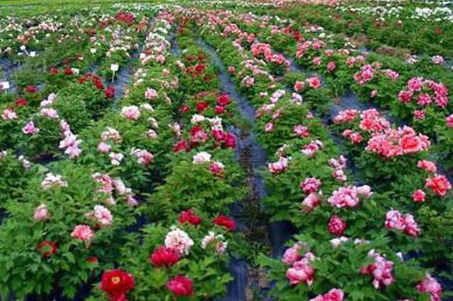 福建省花卉苗木产业产值首次突破700亿元