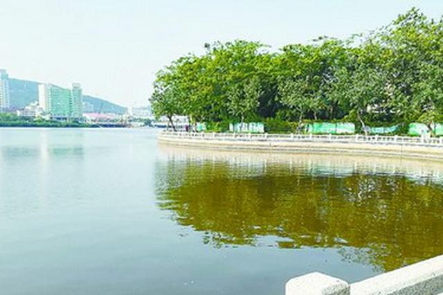厦门筼筜湖湖水变褐色和黄绿色 微藻密度过高导致