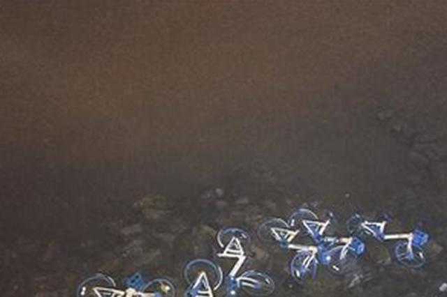 厦门17辆共享单车同一区域失联 原被人丢入海里
