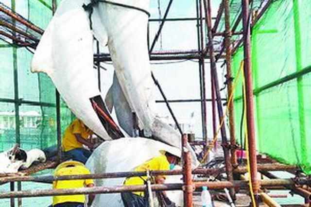 主体部分已回到底座 鼓浪屿白海豚雕塑6月将修复完成