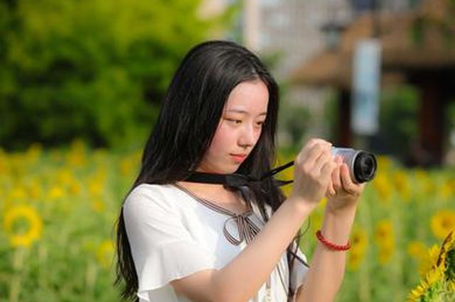 福州花海公园向日葵盛放 游人漫步金色花田(图)