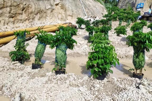 漳浦矿山开发被生态环境部点名 虚假整改应付检查