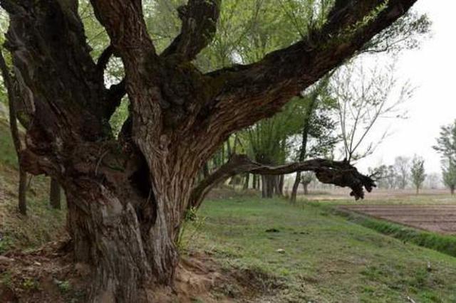 福州永泰建立全省首家古树名木保护工作联络室