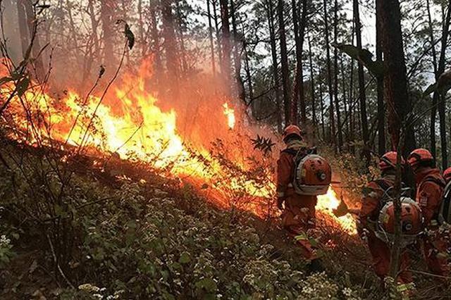 漳州东山:村民丢弃烟头 果林燃起大火