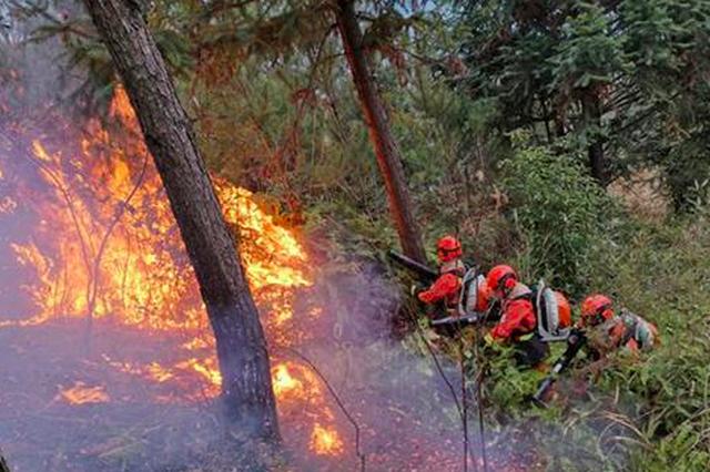 三明大田发生森林火灾 森林消防指战员连夜扑救