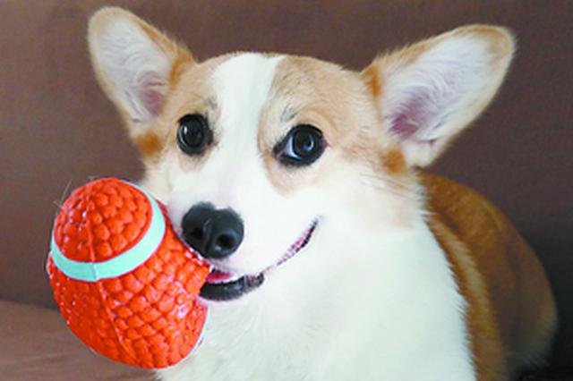 春节临近上门喂养宠物服务在厦升温 宠物店半月接15单
